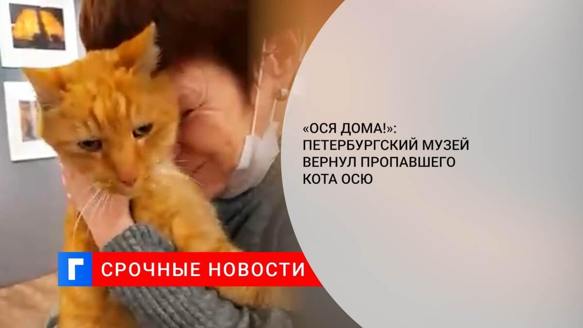 «Ося дома!»: Петербургский музей вернул пропавшего кота Осю