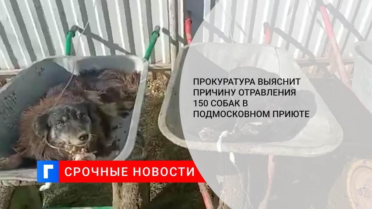 Прокуратура выяснит причину отравления 150 собак в подмосковном приюте