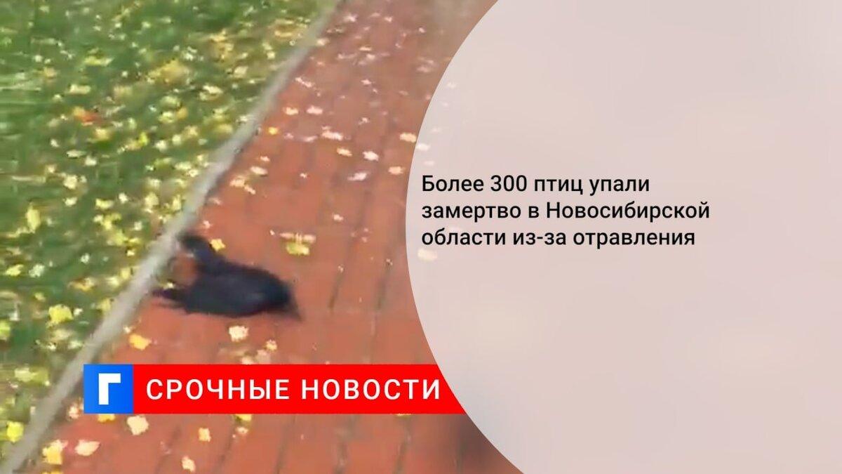 Более 300 птиц упали замертво в Новосибирской области из-за отравления