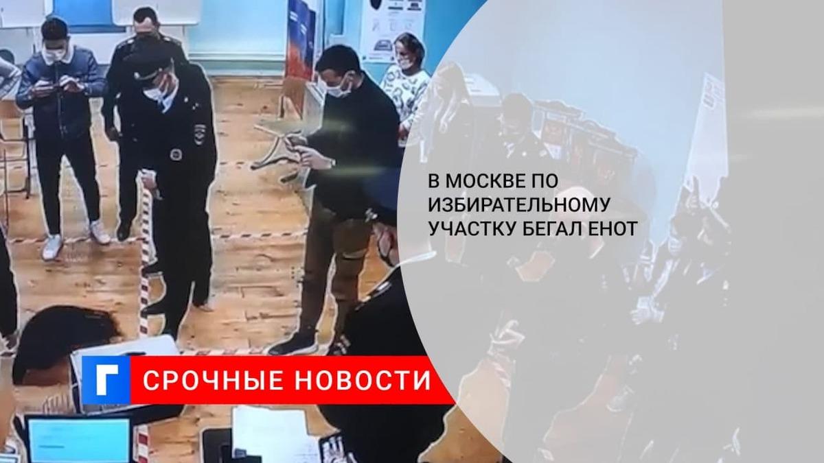 На избирательном участке в Москве семь минут ловили енота