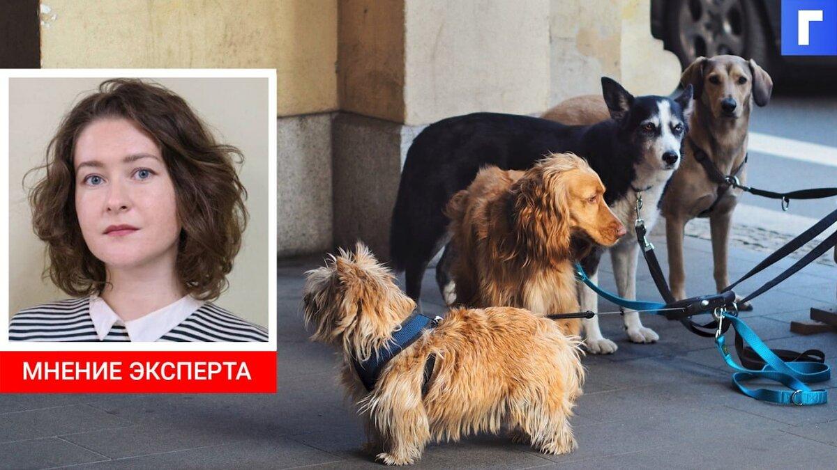 В Госдуму внесен законопроект о правилах посещения магазинов и кафе с животными