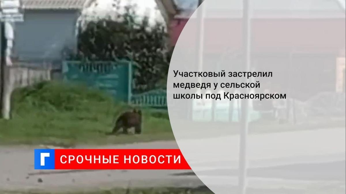 Полицейский убил медведя, вышедшего к сельской школе в Ачинском районе Красноярского края