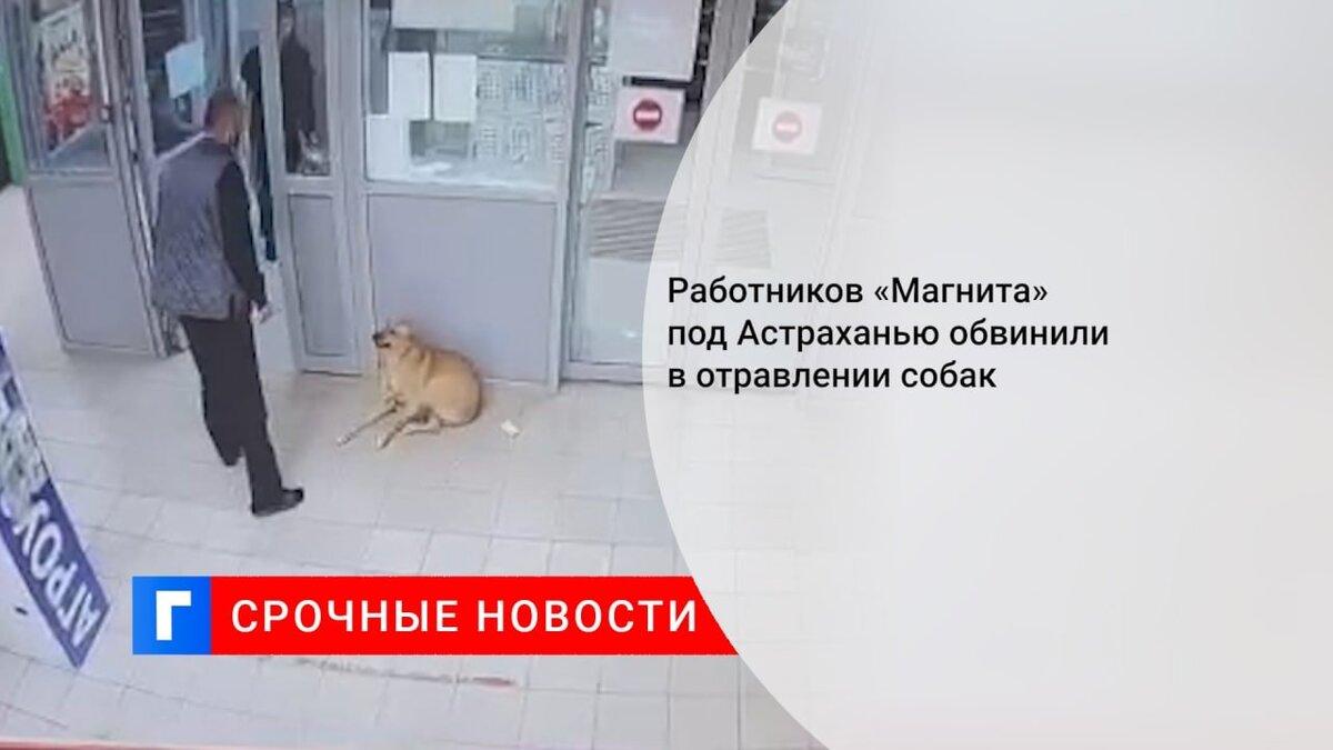 Работников «Магнита» под Астраханью обвинили в отравлении собак