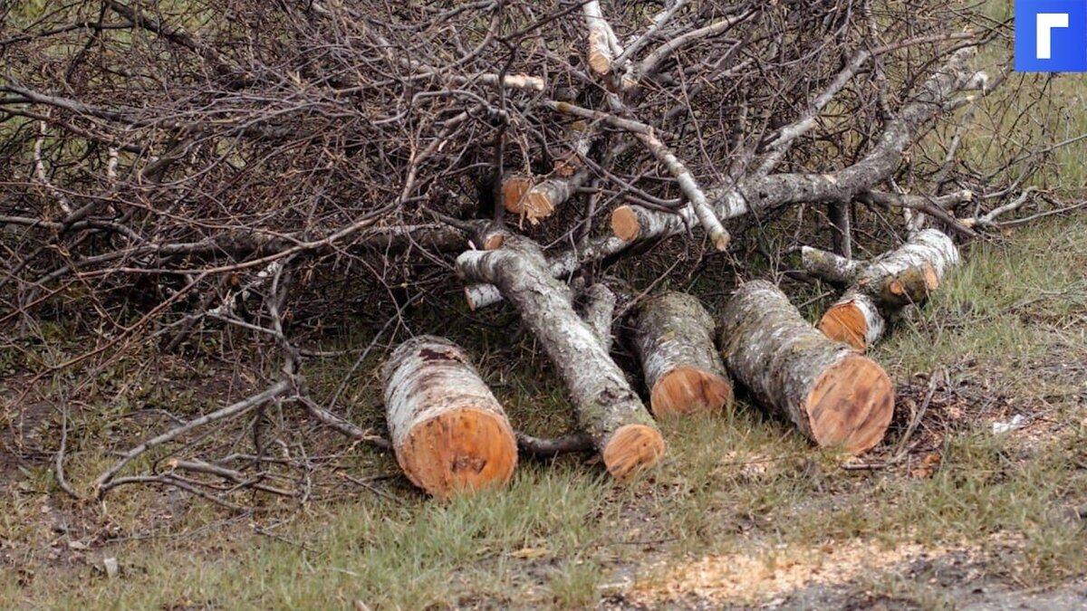 В Подмосковье упавшие из-за сильного ветра деревья повредили 20 машин