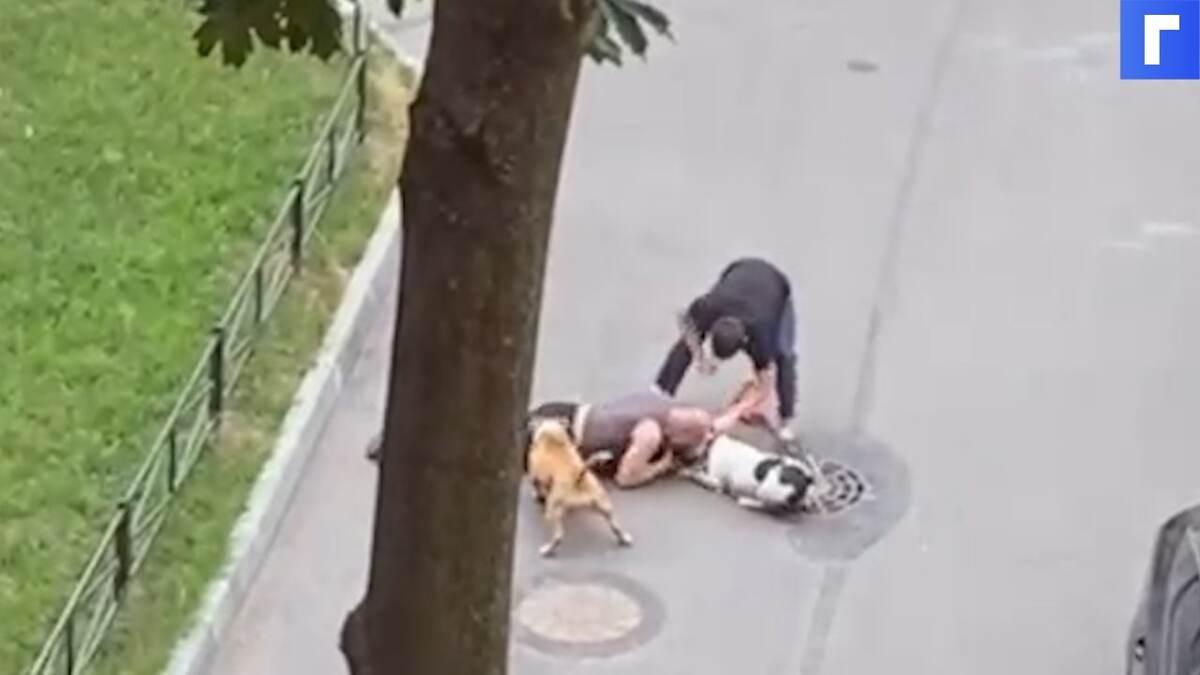 Петербуржец закрыл собой пса от двух стаффордширских терьеров