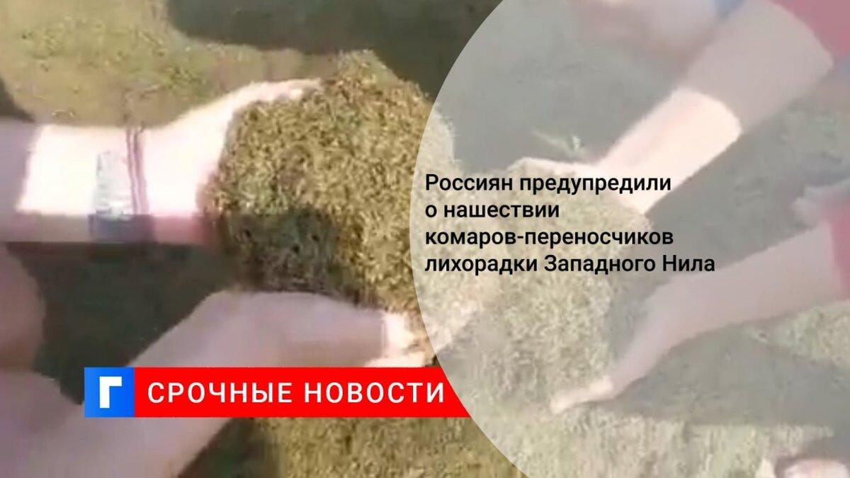 Россиян предупредили о нашествии комаров-переносчиков лихорадки Западного Нила