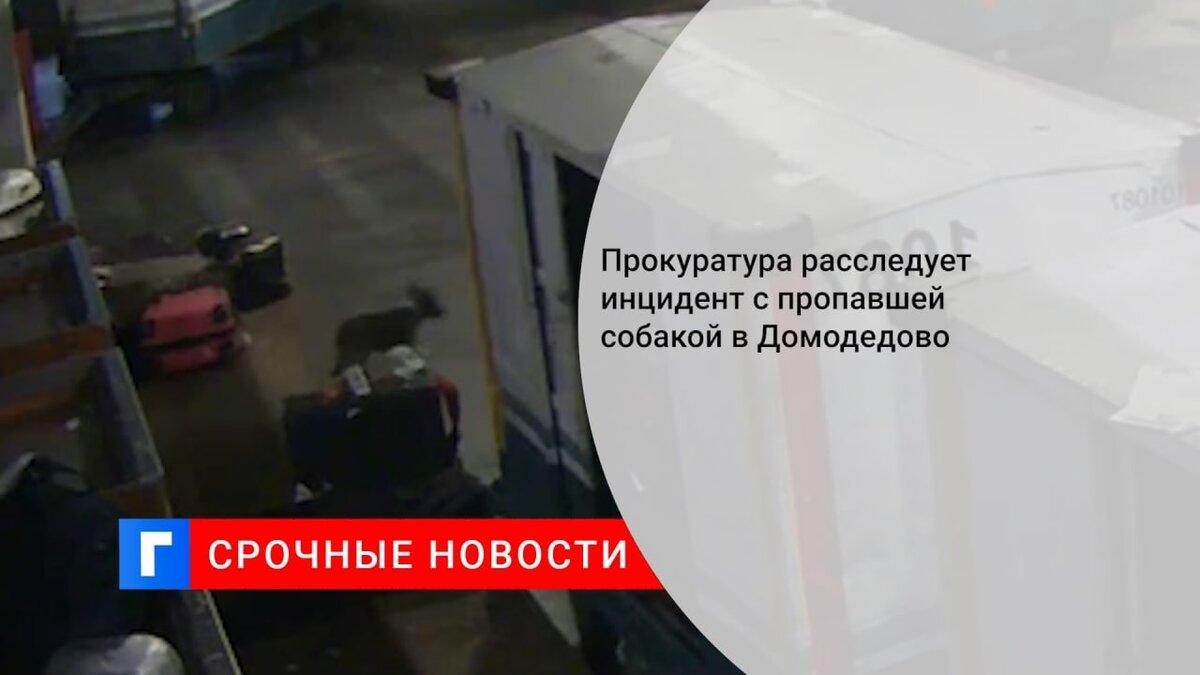 Прокуратура расследует инцидент с пропавшей собакой в Домодедово
