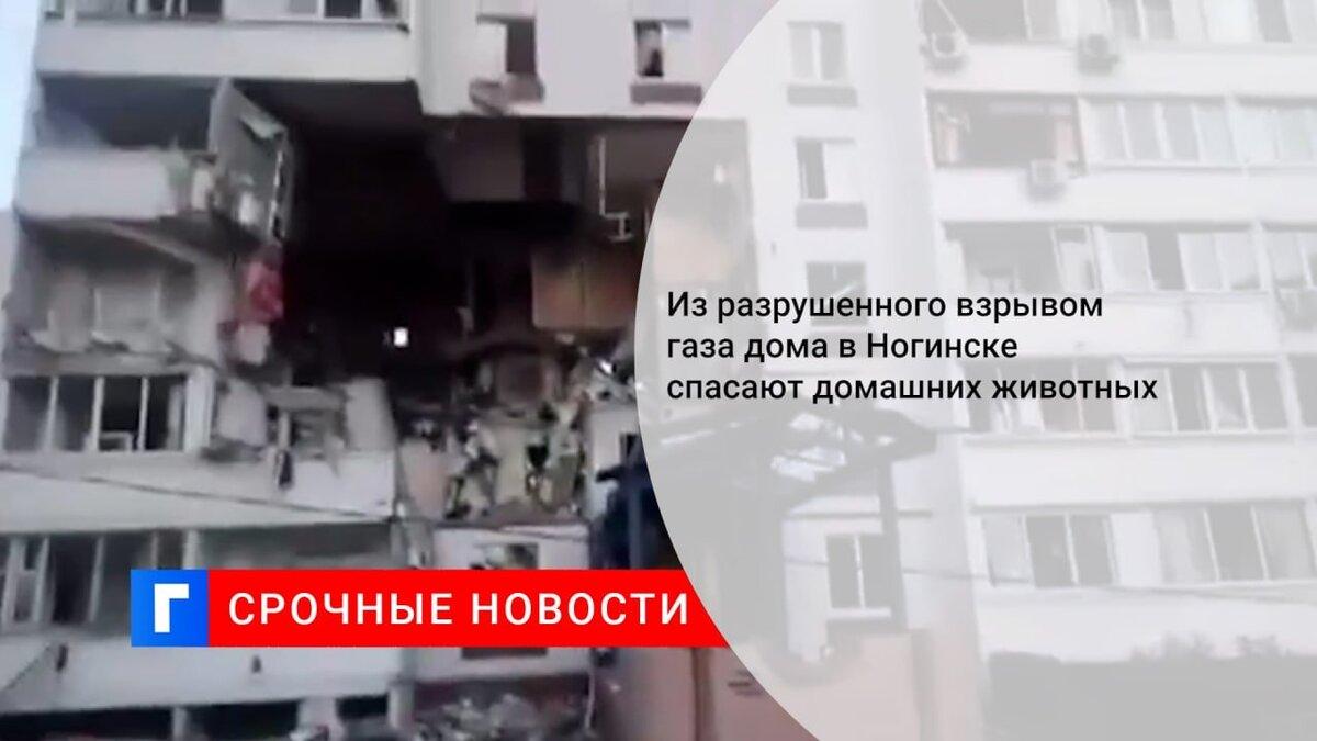 Из разрушенного взрывом газа дома в Ногинске спасают домашних животных
