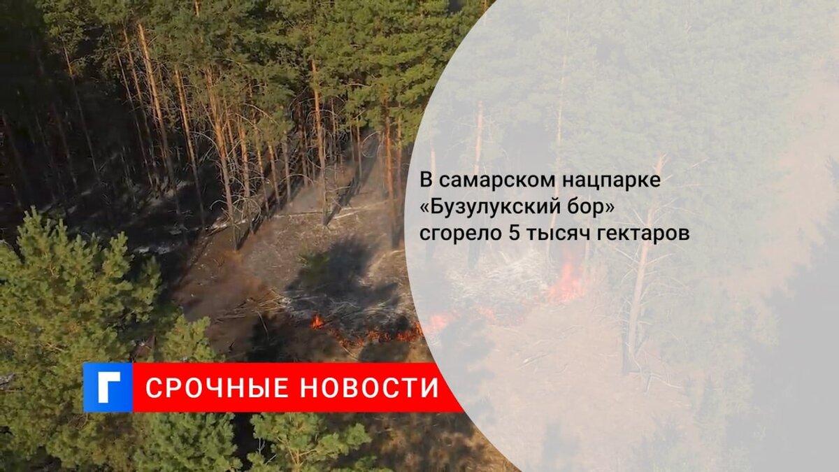 В самарском нацпарке «Бузулукский бор» сгорело 5 тысяч гектаров