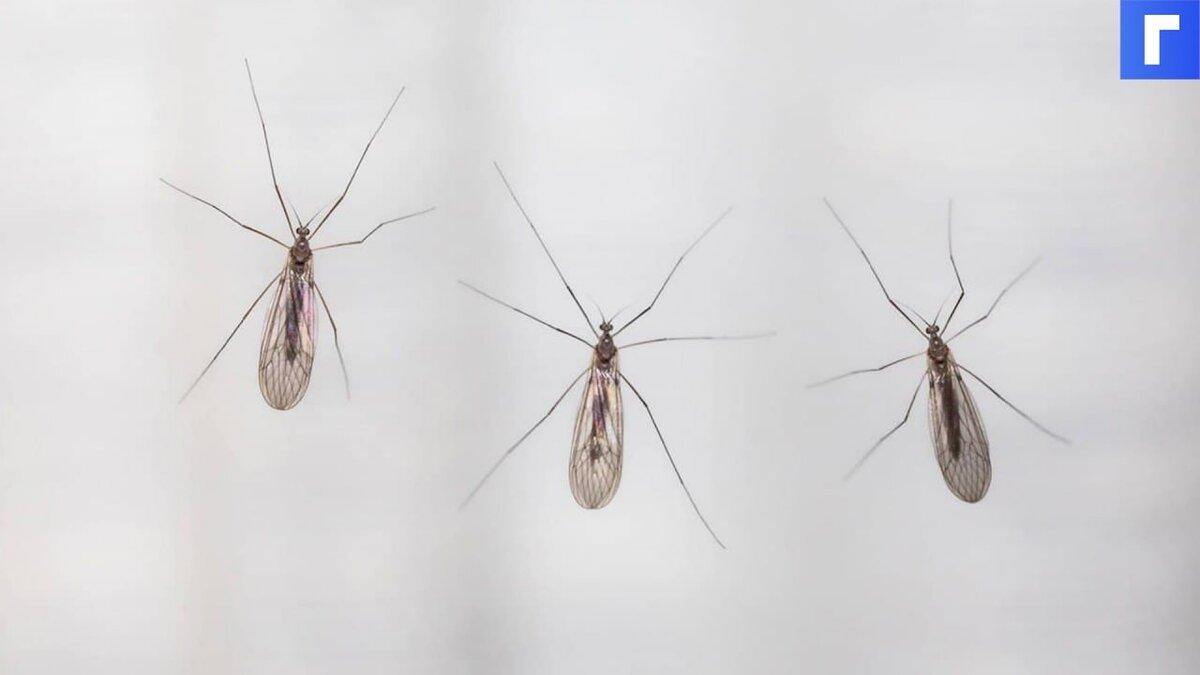 Россиянам рассказали, как комары выбирают свою жертву