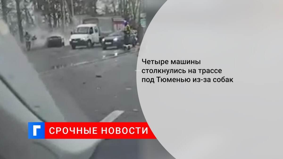 Четыре машины столкнулись на трассе под Тюменью из-за собак