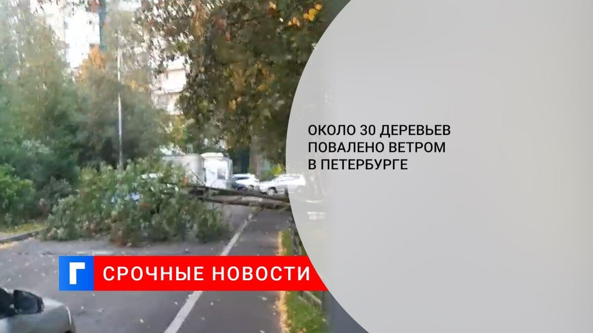 Около 30 деревьев повалено ветром в Петербурге